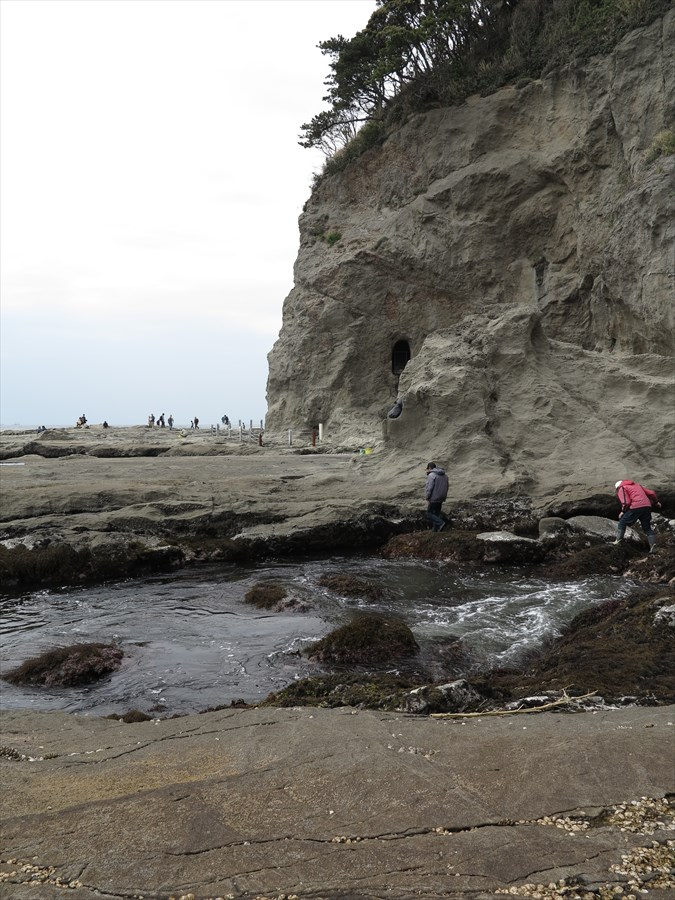 江ノ島岩棚0610