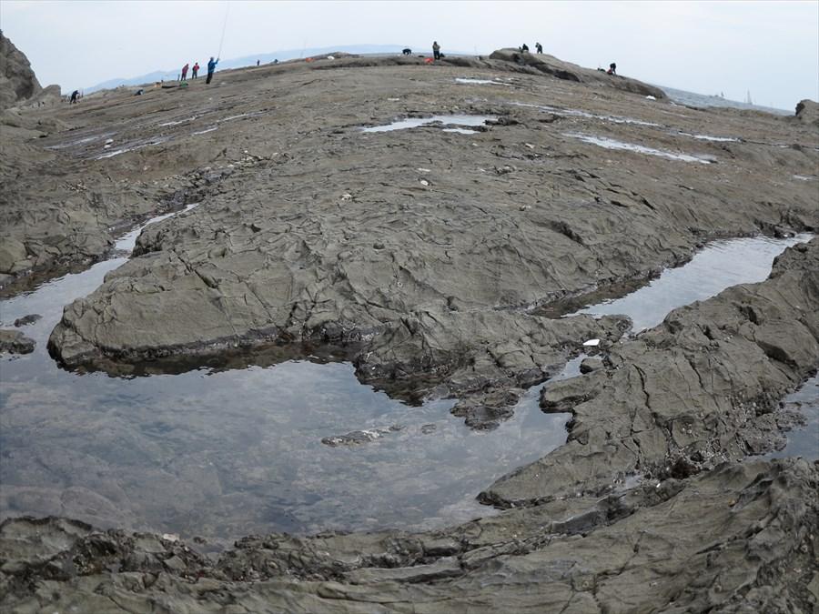 江ノ島岩棚0612