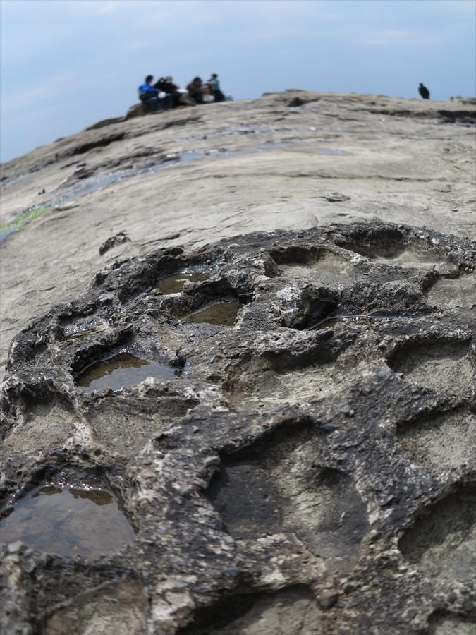 江ノ島岩棚0701