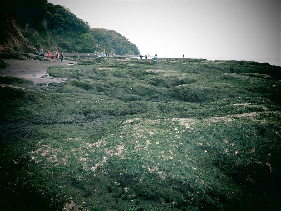 江ノ島岩棚0705