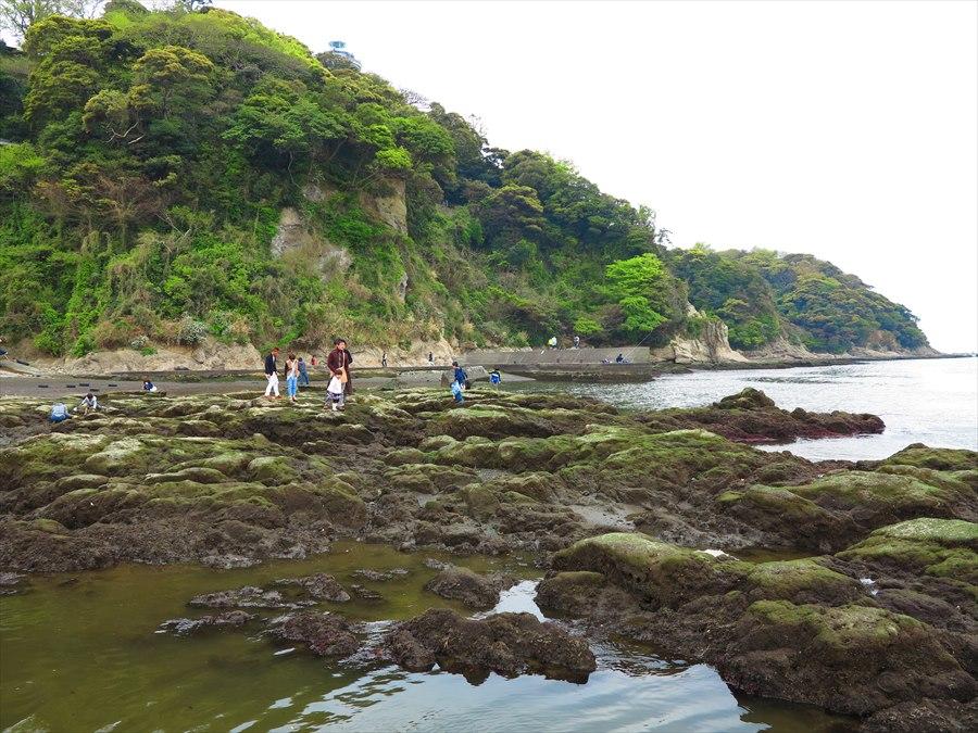 江ノ島岩棚0708
