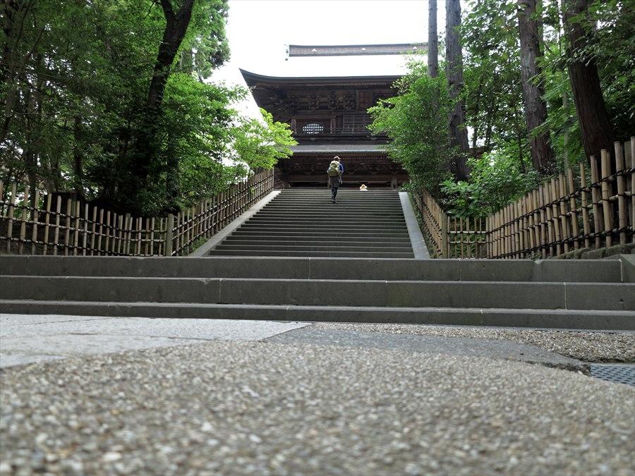 鎌倉紫陽花0201