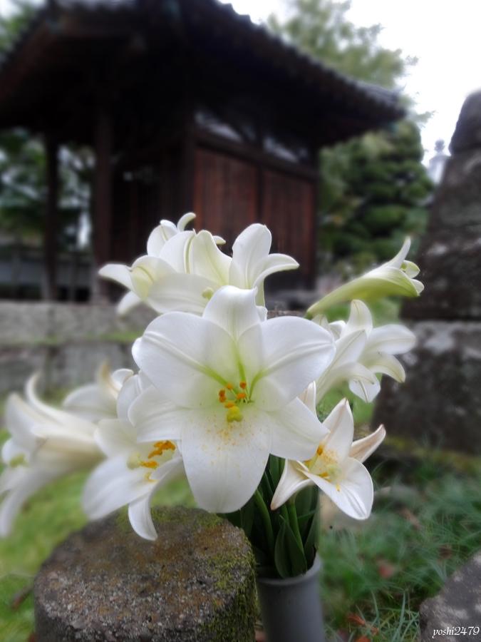 仙台お寺0202