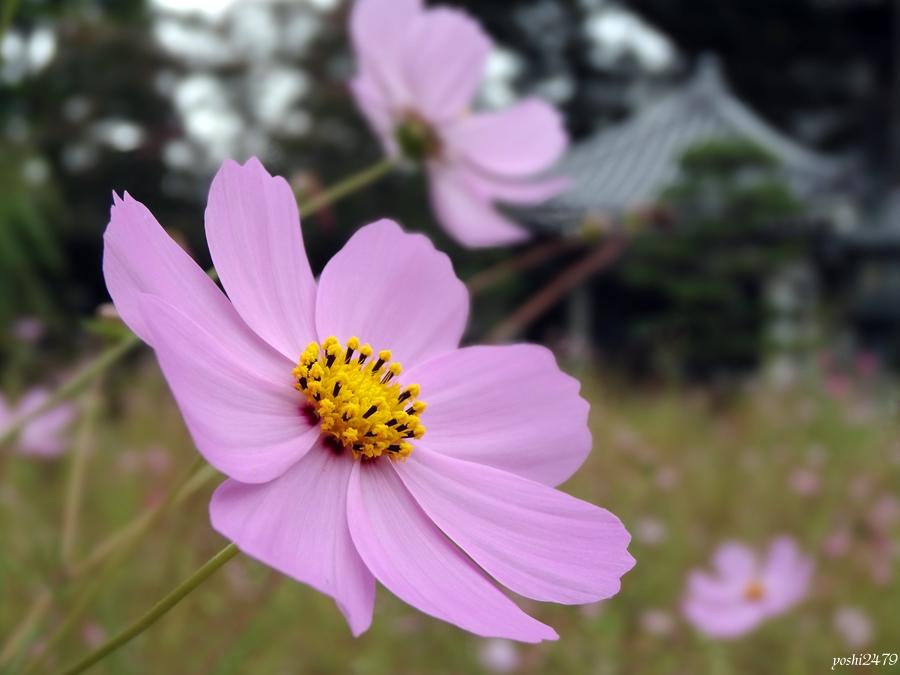 仙台お寺0308