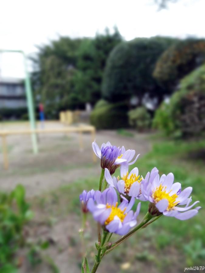 仙台お寺0510