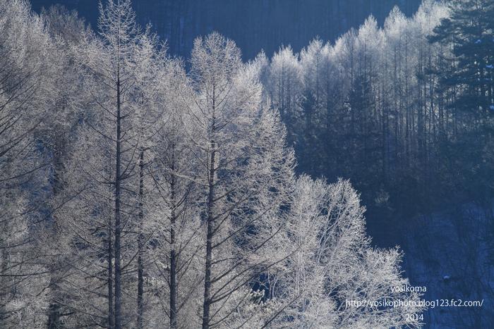 高原霧氷2