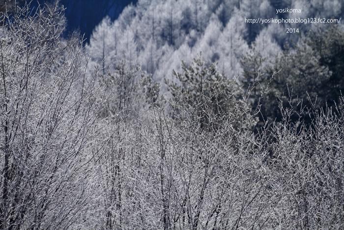 高原霧氷4