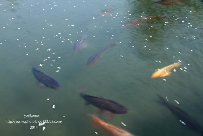 松川プール3