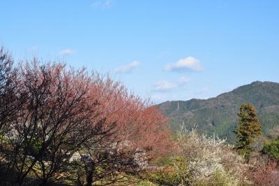 4桑田山14.02.15