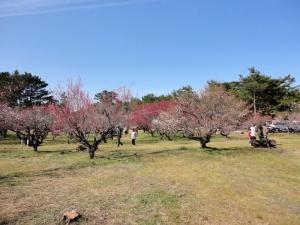 5志島ヶ原14.02.23