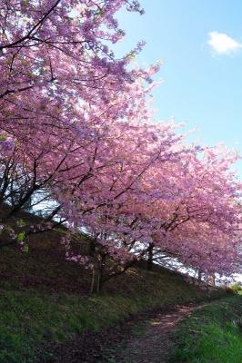 3藤山文化健康公園140322