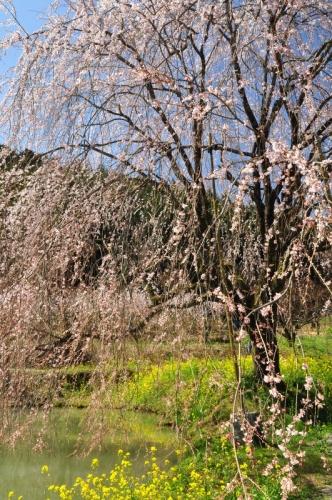 3相野の花14.03.28