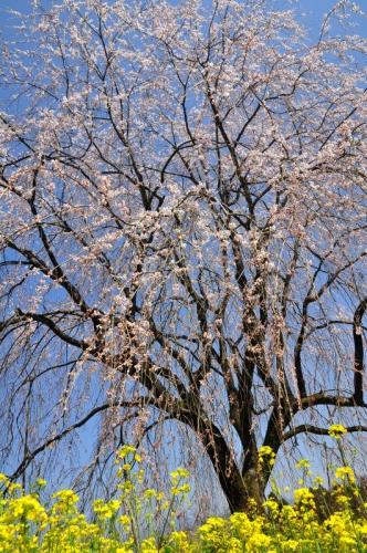 5相野の花14.03.28