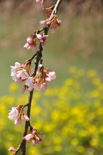 7相野の花14.03.28