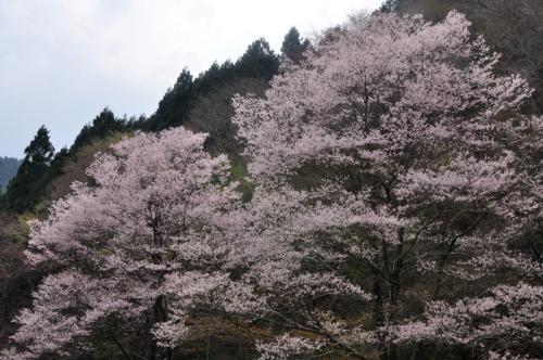 4小田深山14.04.19