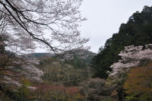 5小田深山14.04.19