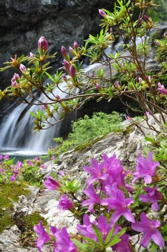 1アメガエリの滝14.05.03