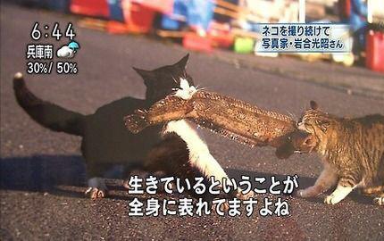 ヽミ* ゚∀゚ミノ ねこー!