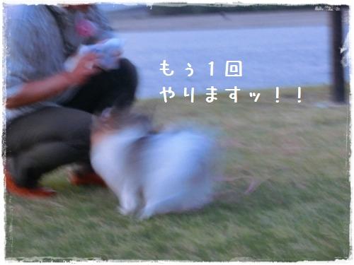 CIMG3146.jpg