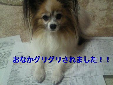 moblog_d3fc10f0.jpg