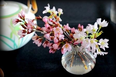農協で買った桜 (2)