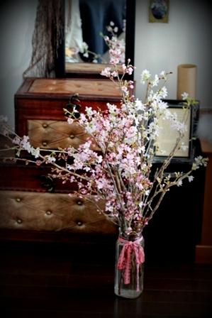 農協で買った桜