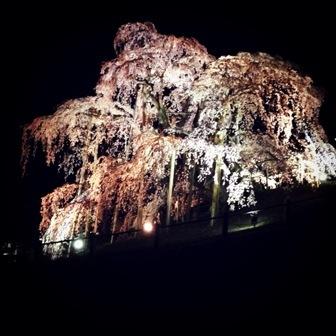 福島の桜 (3)