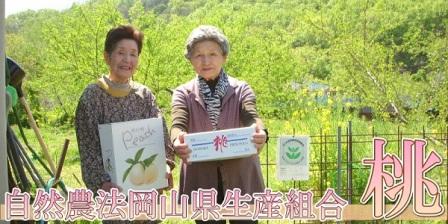 岡山県産の桃 (4)