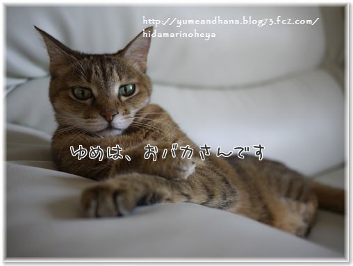 01-14_qpLgnLvxJH5lsl1410523172_1410523209.jpg