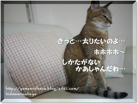 01-モカ140829-3