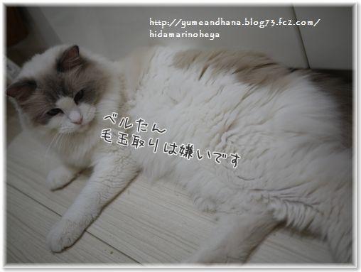 01-2BzUbqKwB5_lAEjX1412516742_1412516961 (3)