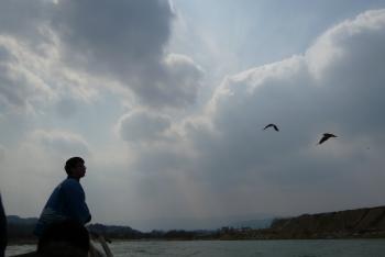 船頭さんと鳥