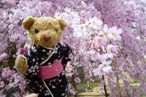 べぁーと桜