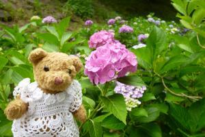 ベァーと紫陽花