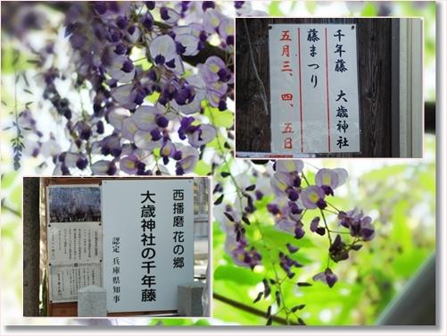 2014-5-20-1.jpg