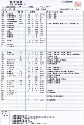 2014-4-27sゆめ