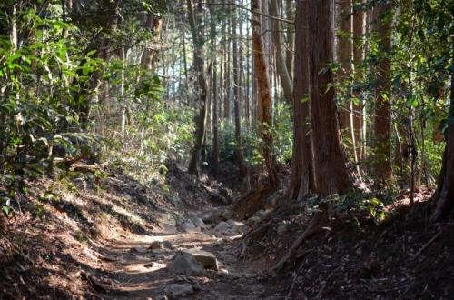 筑波山並木