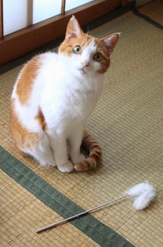 ブログNo.20(猫じゃらし)1