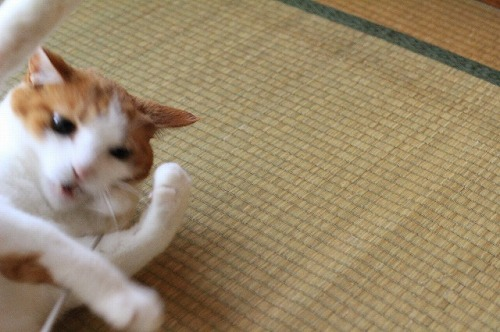 ブログNo.21(猫じゃらし)3