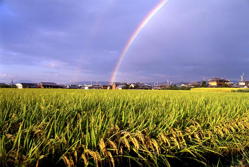 虹と稲02
