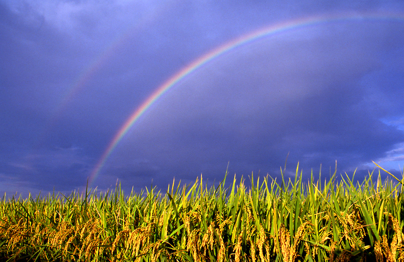 虹と稲01