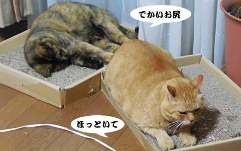 14_08_29_1.jpg