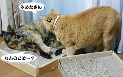 14_08_29_4.jpg