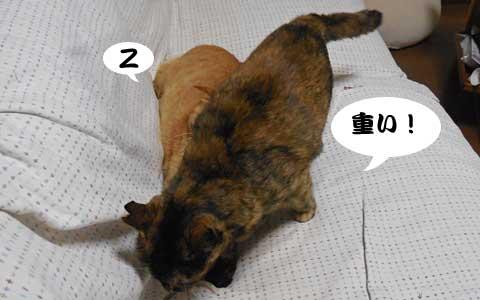 14_10_01_5.jpg