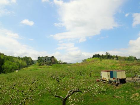 アップルロード りんご畑