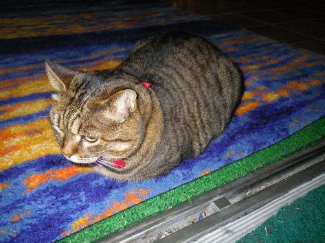 ホテル瀬波観光 猫女将