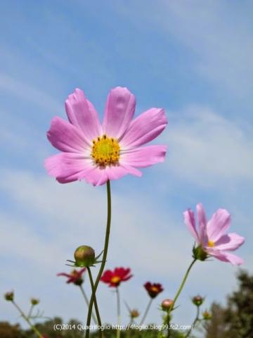 秋の花 芦花公園