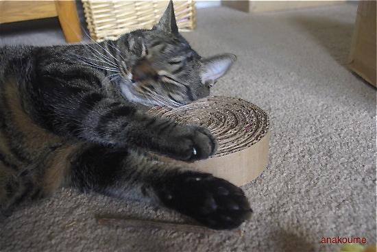 枕サイズ2