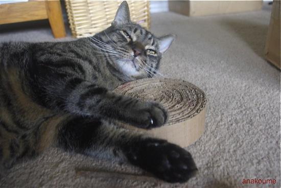 枕サイズ4