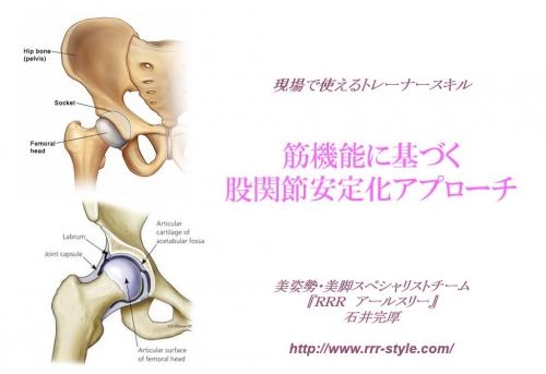 筋機能に基づく股関節